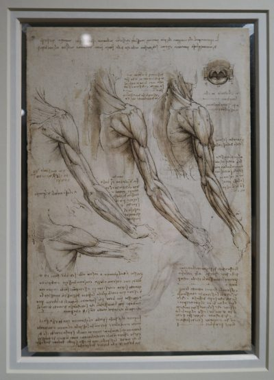 National exhibitions of Leonardo's drawings: Ulster Museum in Belfast, N. Ireland
